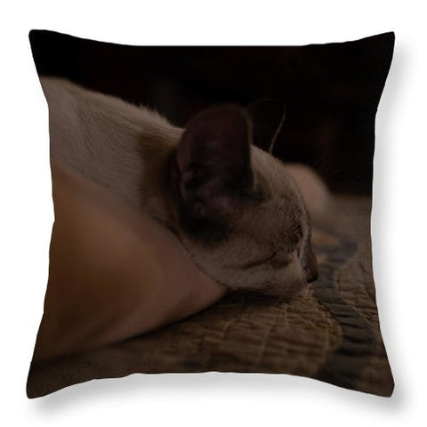 Cat Nap Closeup - Metal Print - PME Prints