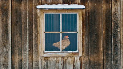 5 Tips to Winterize the Coop