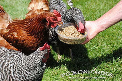 Pecking Order® Sun Pecks Sunflower Puree Poultry Treat