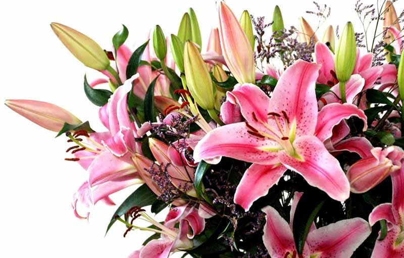 Different Types of Lily for Your Flower Bouquet