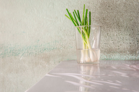 Green Onions is a cool plant you can simply put at your office