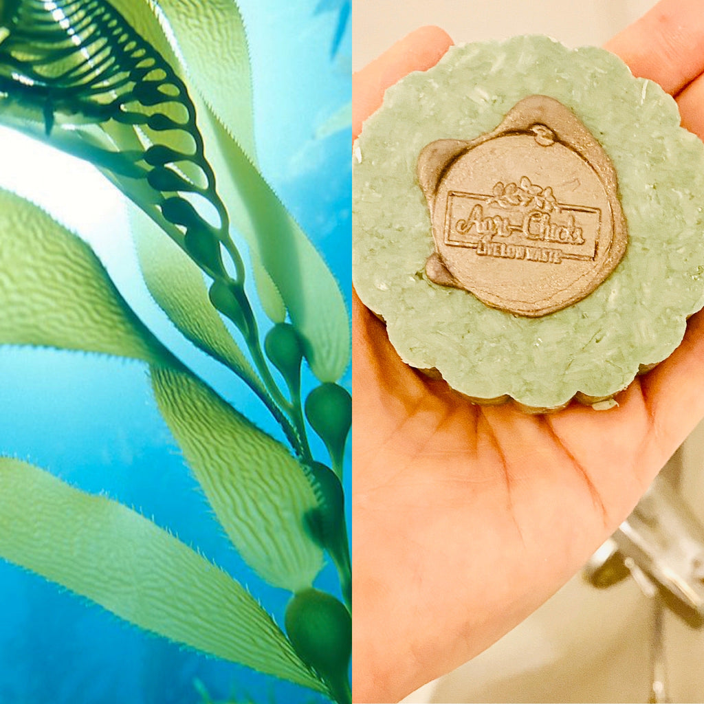 Shampoo & Conditioner Bars! What's all the Hype?