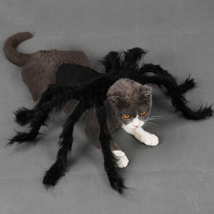 Pet Halloween Spider Outfit!-Furbaby Friends Gifts