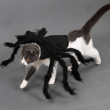 Load image into Gallery viewer, Pet Halloween Spider Outfit!-Furbaby Friends Gifts