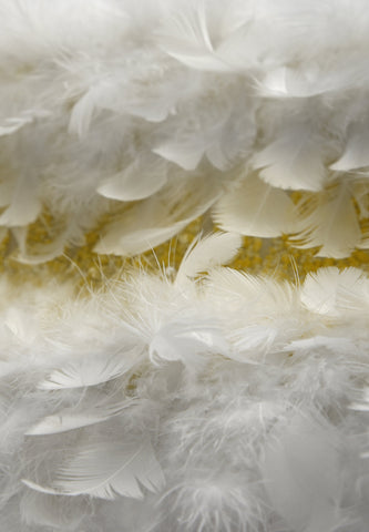 FASCINATING FEATHERS