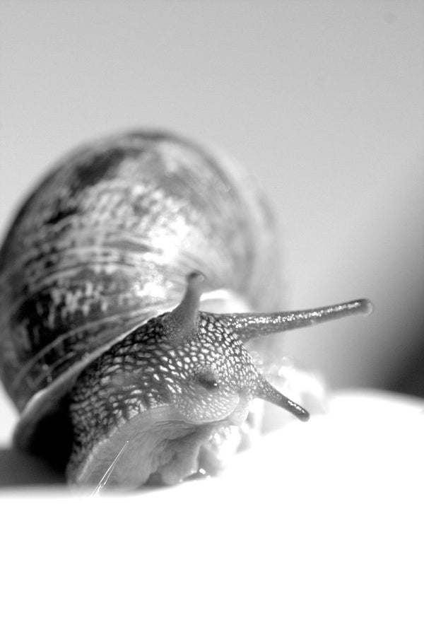 Snail Serum + Its Many Uses