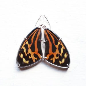 Emily Eliza Arlotte Handcrafted Fine Jewellery - Real Butterfly Wing Earrings Tithorea harmonia orange black sterling silver