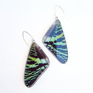 Emily Eliza Arlotte Handcrafted Fine Jewellery - Real Butterfly Wing Earrings Urania ripheus