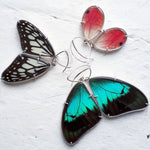 Emily Eliza Arlotte Handcrafted Fine Jewellery - Real Butterfly Wing Earrings Emily Eliza Arlotte - Butterfly Wing Jewellery Ideopsis juventa manillana white black sterling silver