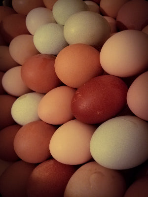 1 Dozen Non GMO Pasture Raised Chicken Eggs Assorted Sizes M-XL & Colors