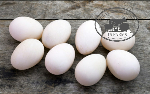 Pasture Raised • Non GMO • Duck Eggs • 1dz