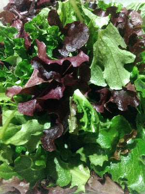 Red and green leaf lettuce - 4oz bag