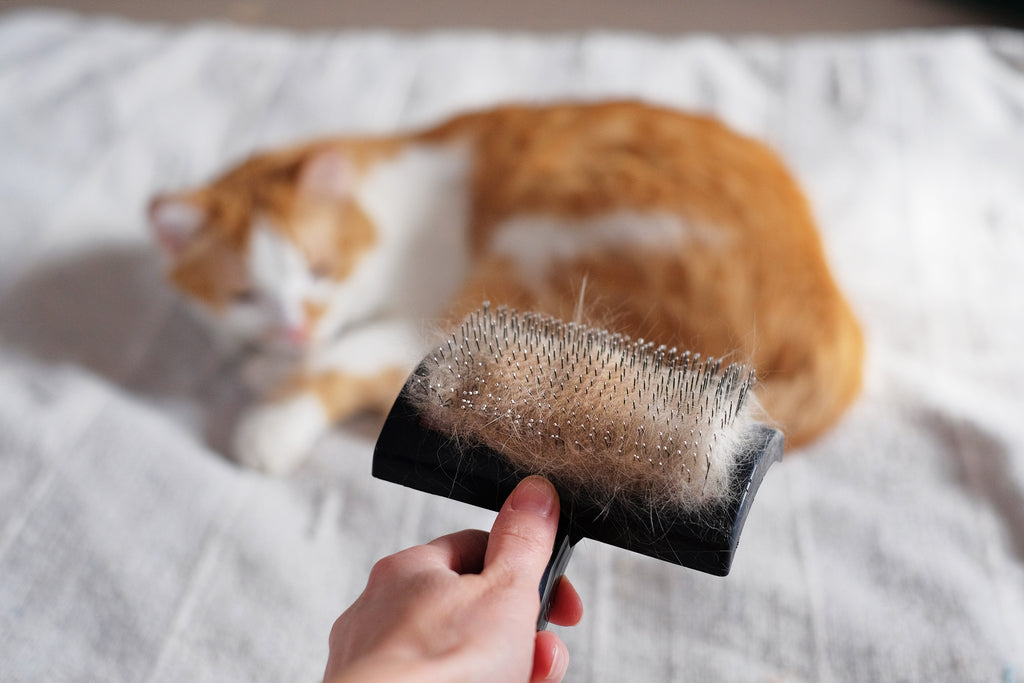 Cat fur on a brush