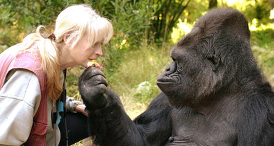 Koko the gorilla is gone, but she left a legacy