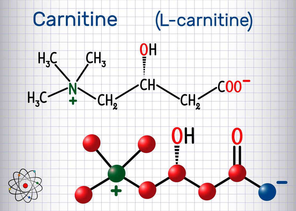 Carnitine (L-carnitine) molecule   Acetyl-L-Carnitine: The Lesser Known Cousin   difference between l-carnitine and acetyl l-carnitine