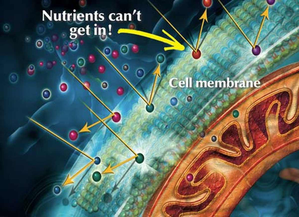 Image of cell membrane where nutrients can't get in | What Is A Coenzyme Q10? Is It Good Or Bad? | what is coenzyme q10