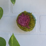 RESERVED for CAYCI Mini Puff | Fiber Sculpture in Wood Frame - Pink + Green