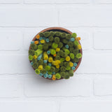 Puff | Green Felted Wools | Fiber Sculpture in Vintage Teak Bowl 1/2