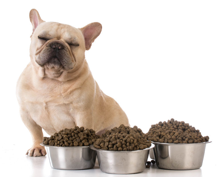 A Pawsitively Easy Way to Transition Foods