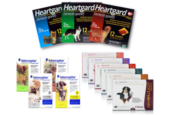 Heartworm Disease - Testing and Prevention
