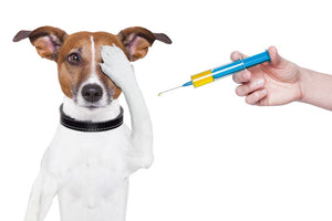 Vaccinating your Pets