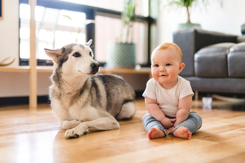 Dog laying next to baby sitting on floor
