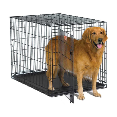 Golden retreiver standing in crate entrance