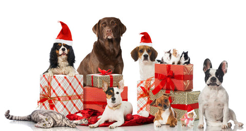 Five dogs with Christmas Gifts