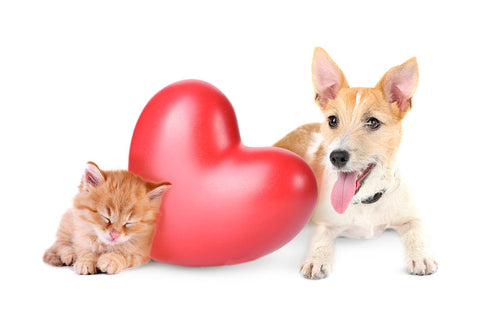 Dog and cat with heart in between