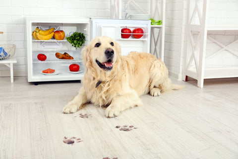 Golden Retriever Laying Down with Paw Prints on wood floor in home