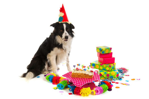 Dog with Birthday Presents and Cake