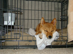 Dog sleeping in crate