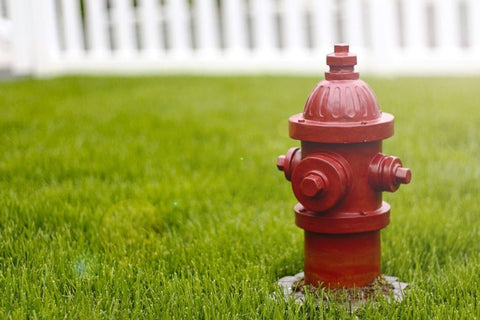 Fire hydrant in grass