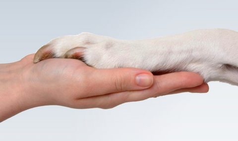Dog Paw on Human Hand