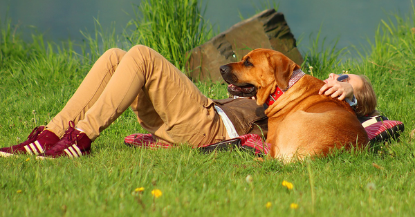 Dog and Owner Laying in Grass