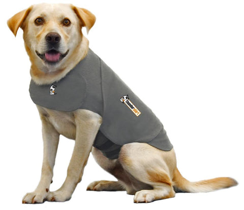 Dog with calming vest