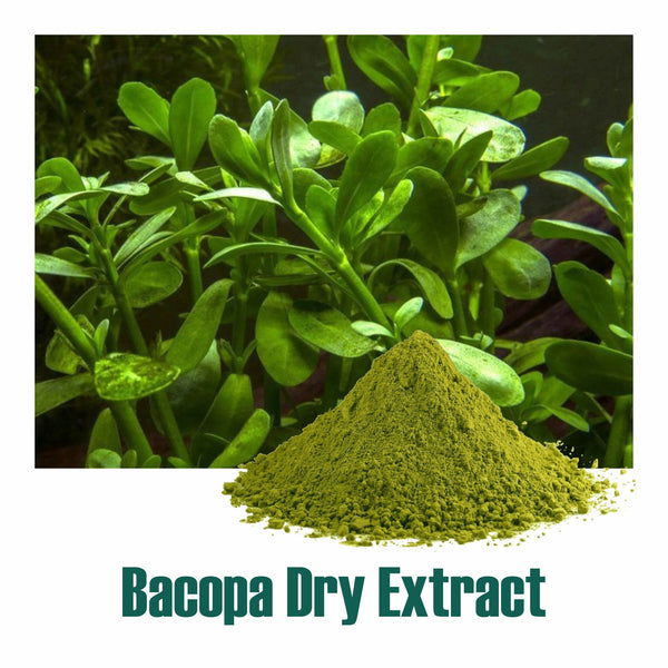 Bacopa Extract 20% Bacosides  by UV