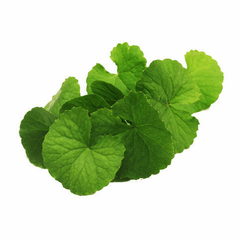 Gotukola Herb Powder  Centella Asiatica