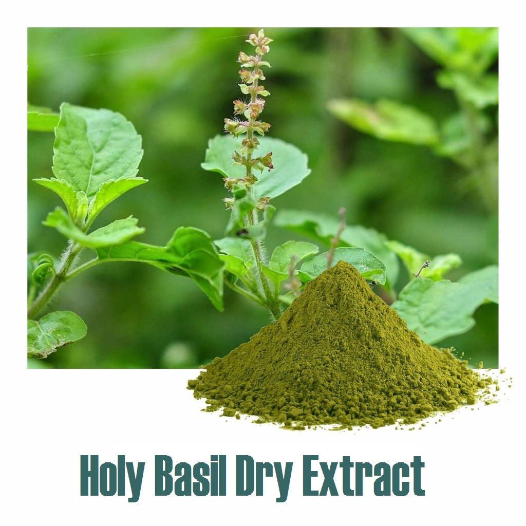 Holy Basil Extract