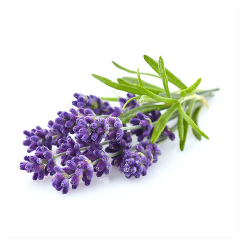 Lavender Flower Powder  Lavandula augustifolia