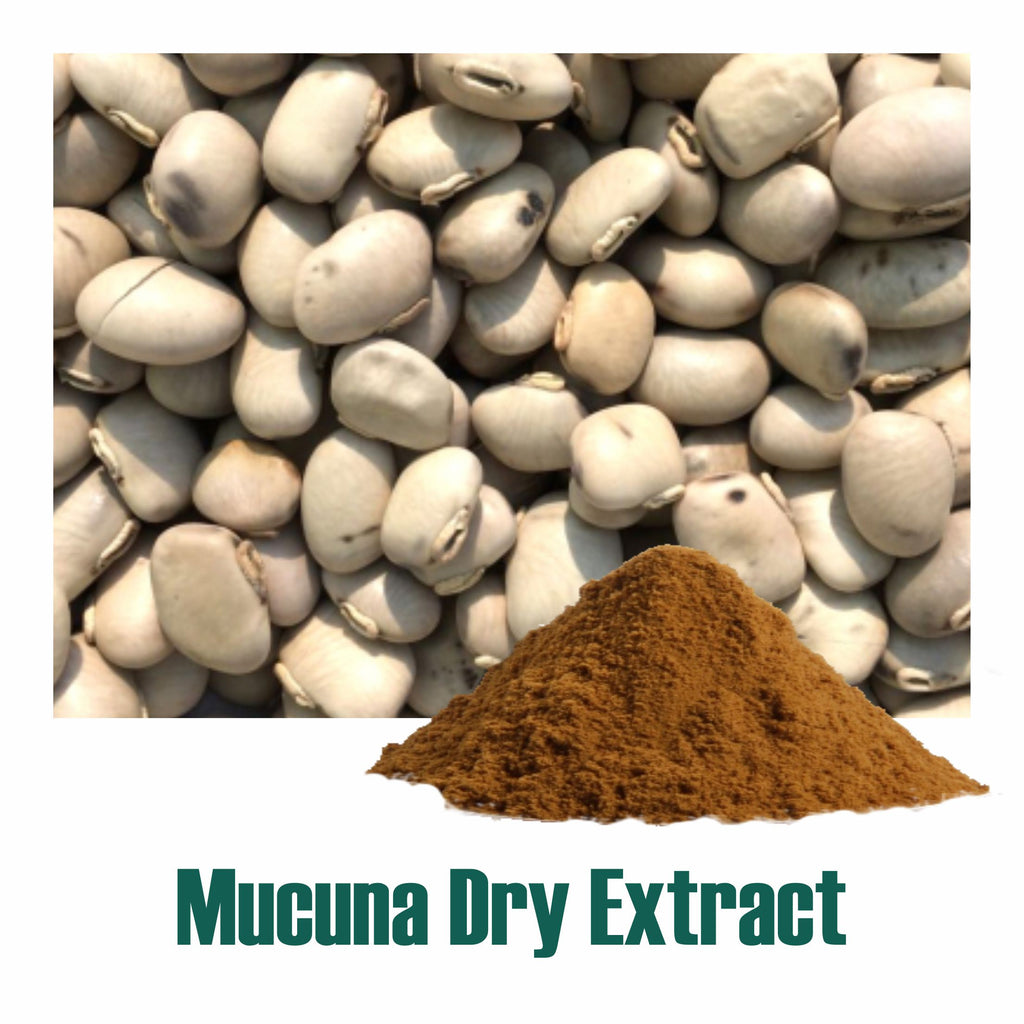 Mucuna (Mucuna pruriens) dry Extract - 20% L-Dopa by Titration