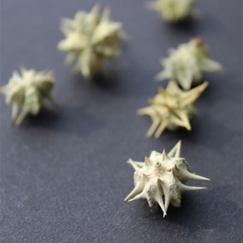 Tribulus Fruit Powder  Tribulus Terresteris