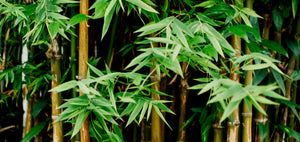 Bamboo... Is it better than plastic?