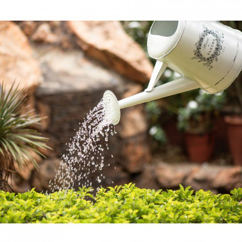Buy FABULIV Floreal Watering Can online