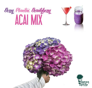 "Mix Assorted Purple/Plum ""ACAI"""