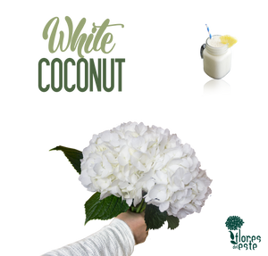 "White ""COCONUT"""