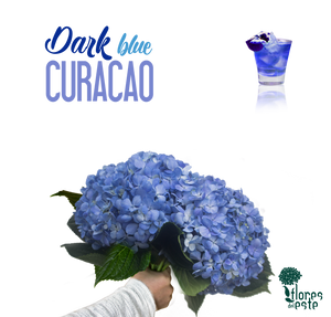 "Blue (Dark) ""CURACAO"""