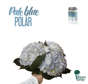 "Blue (Pale) ""POLAR"""