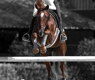 Incrediwear Equine Belgium & Netherlands