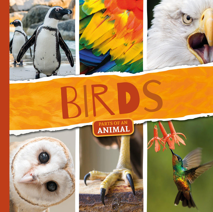 Parts of an Animal: Birds | Children's Books | Non-Fiction Books | BookLife Publishing Ltd